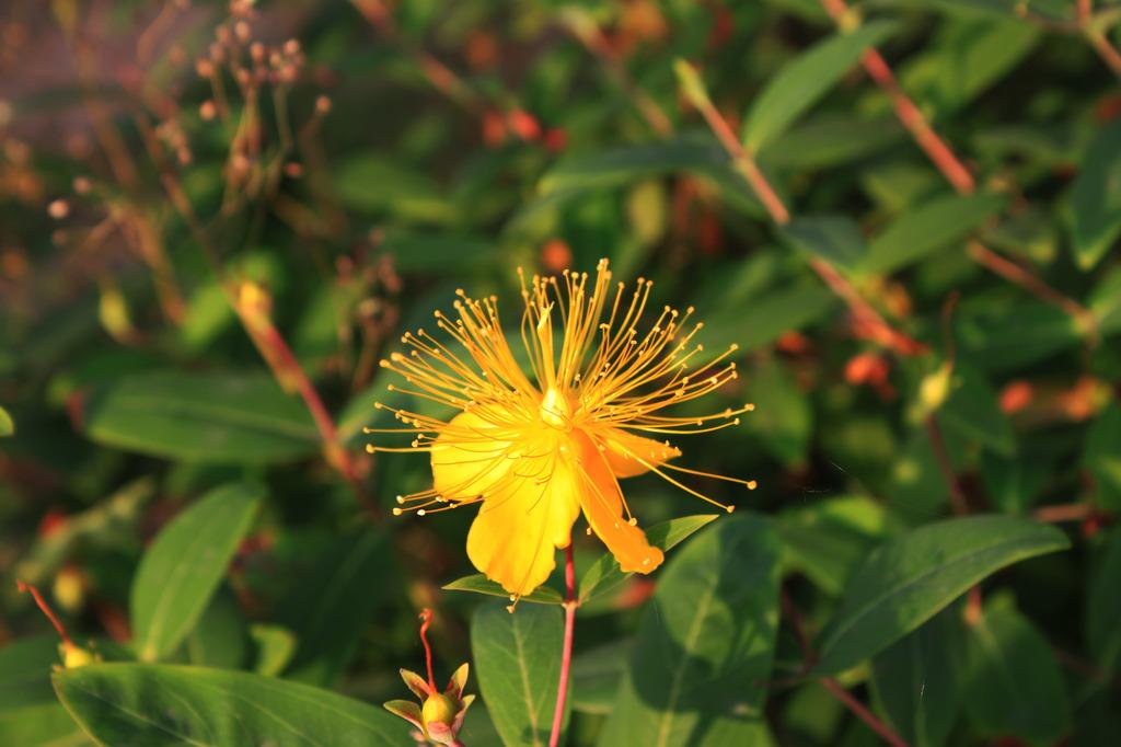 杭州植物花卉图片 图片