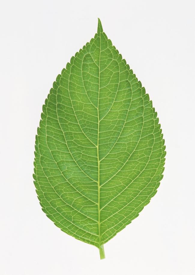 小清新植物白底