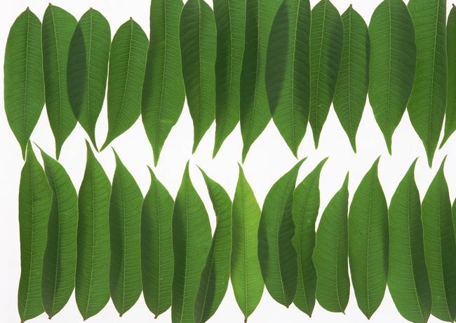 版面美化绿叶