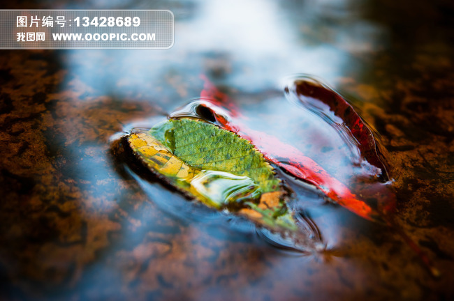 小溪流水落叶意境摄影美图