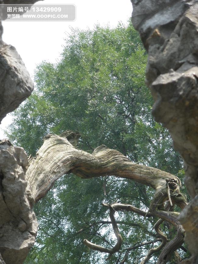苏州园林假山植物摄影