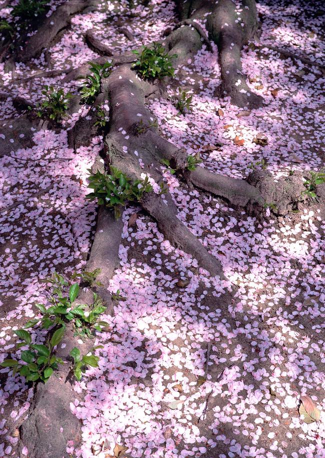 自然界花草树木绿叶植物背景