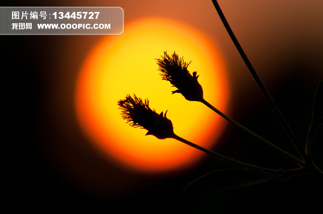 溫馨意境日出創意攝影美圖圖片素材(圖片編號:)_自然圖片