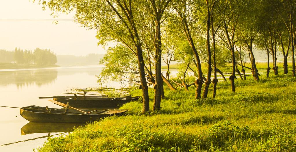 大自然山水风景图片唯美柳树林