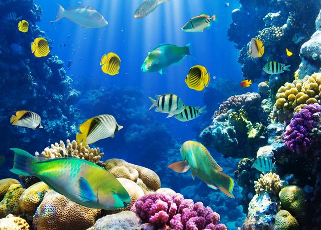 海洋世界5电视背景墙