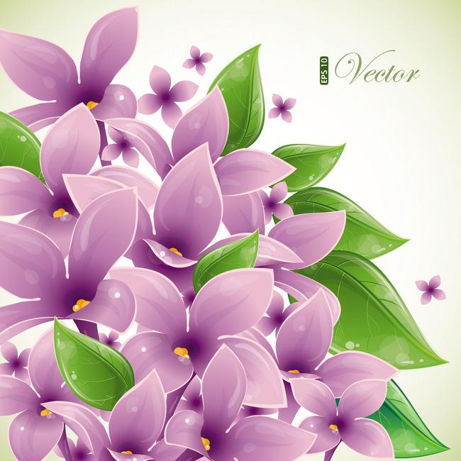 韩国花卉 手绘花