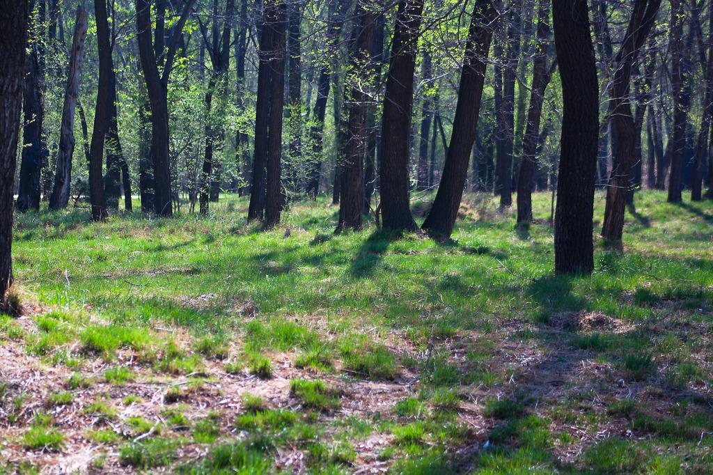 草地树木模板下载 草地树木图片下载