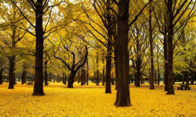 油画乡村银杏树