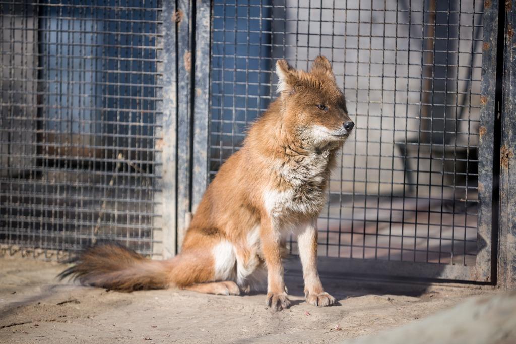 极超清动物火狐图片