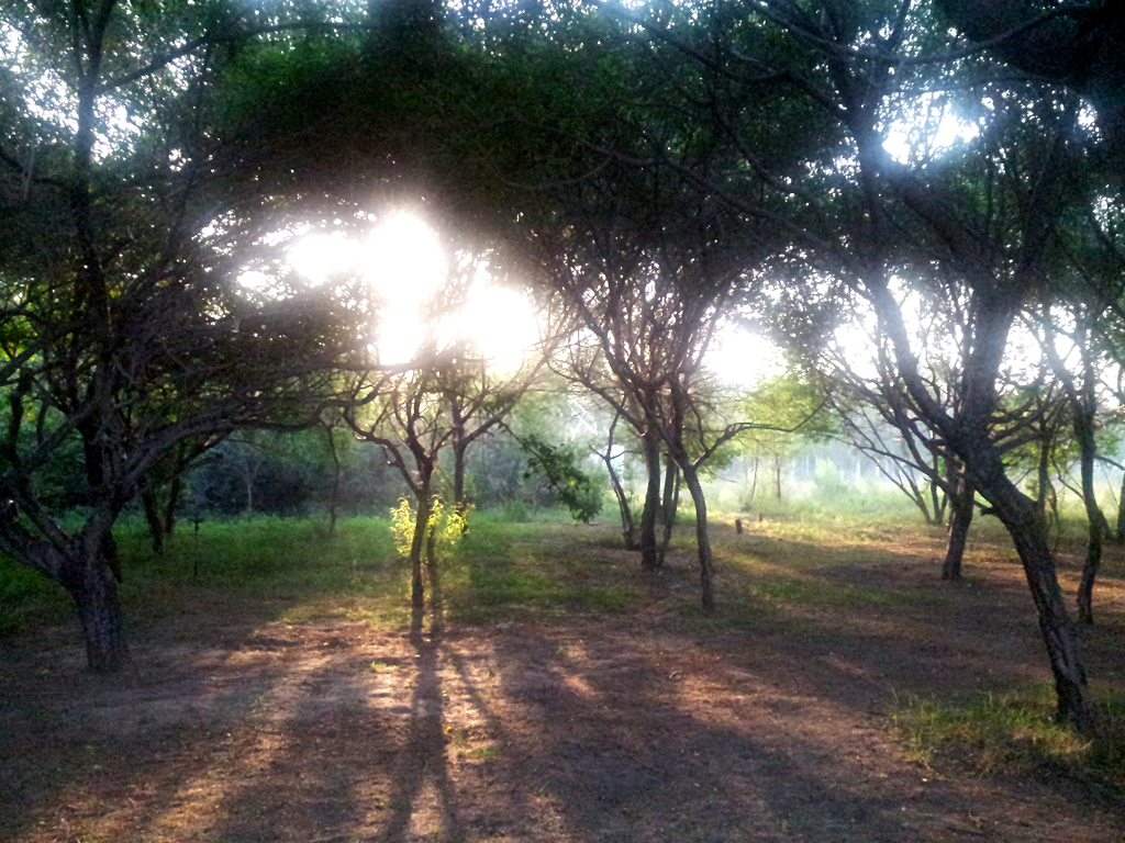 碧波 翠柳 垂柳 夏天 盛夏 夏季 春暖花开 绿色 蓝色 灰色 风光 树林图片