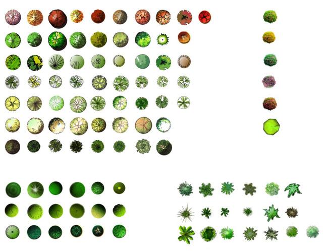 植物平面图例模板下载