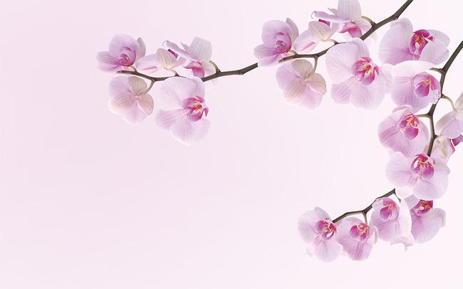 蝴蝶兰玉兰花桃花花卉壁画