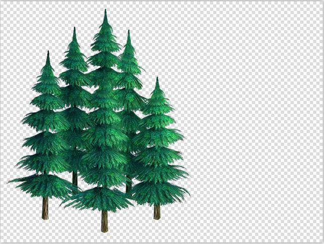小松树绿叶植物图片下载