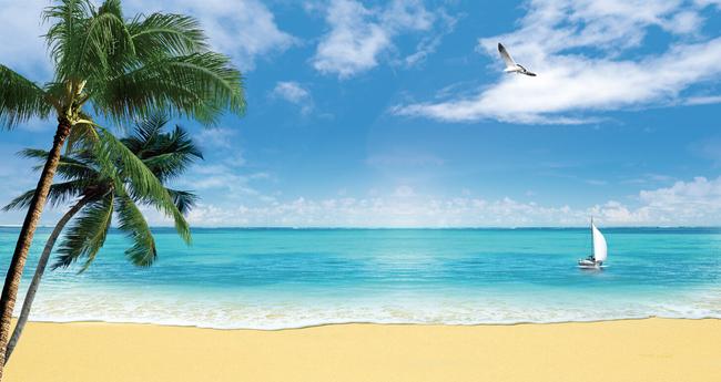 椰子树海鸥帆船大海