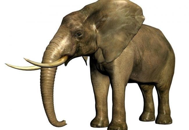 大象3d动物模型
