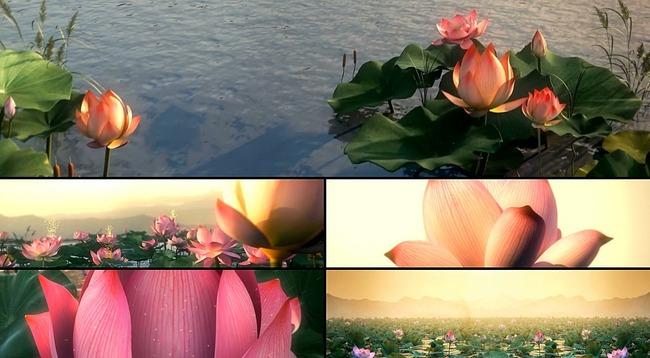 """葫芦丝演奏""""荷塘月色""""穿什么衣服合适淡雅的翠绿色配合粉白,桃红,粉红"""