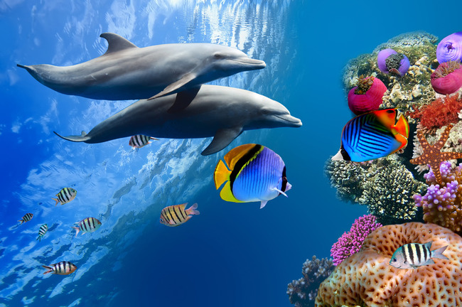 海底世界海洋海水海豚3d地板地砖背景墙