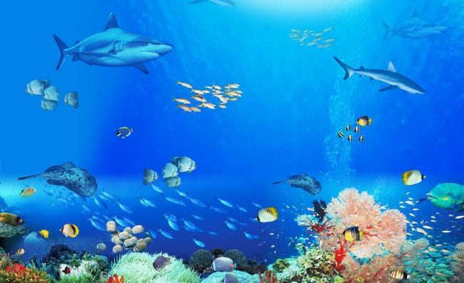 壁纸 海底 海底世界 海洋馆 水族馆 桌面 650_396图片