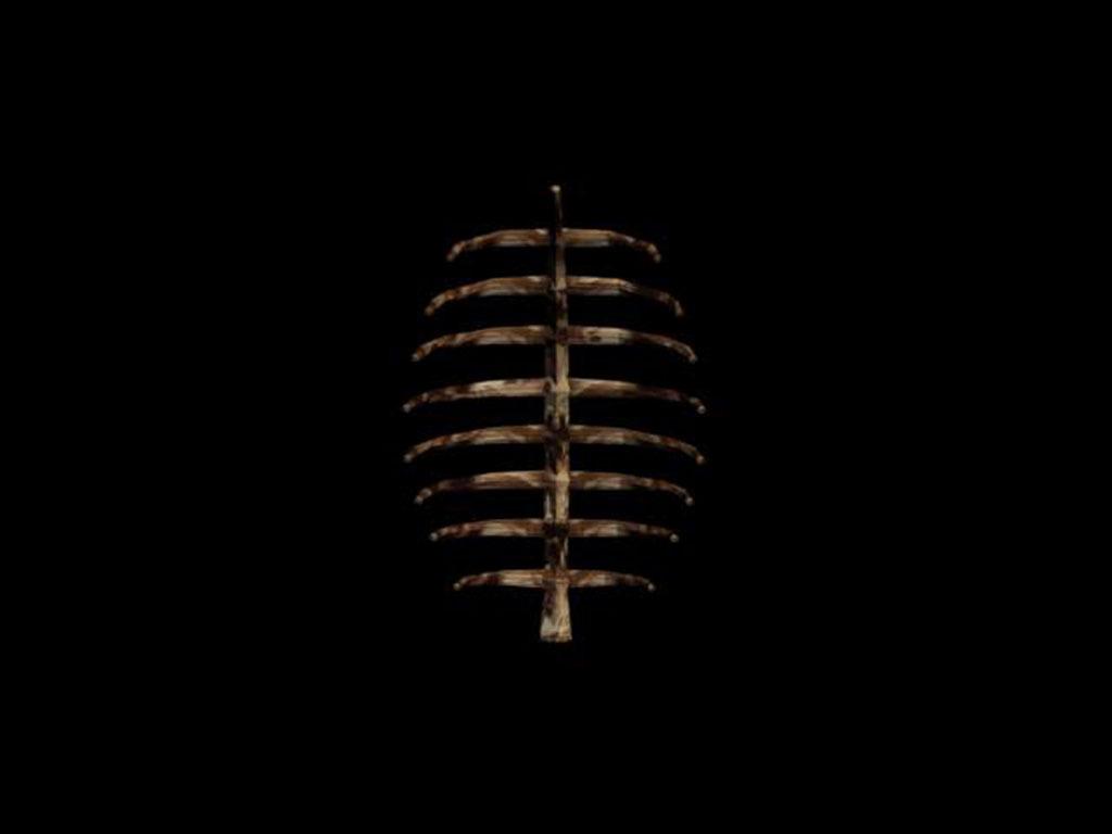 3d骨架模型模板下载(图片编号:13635315)