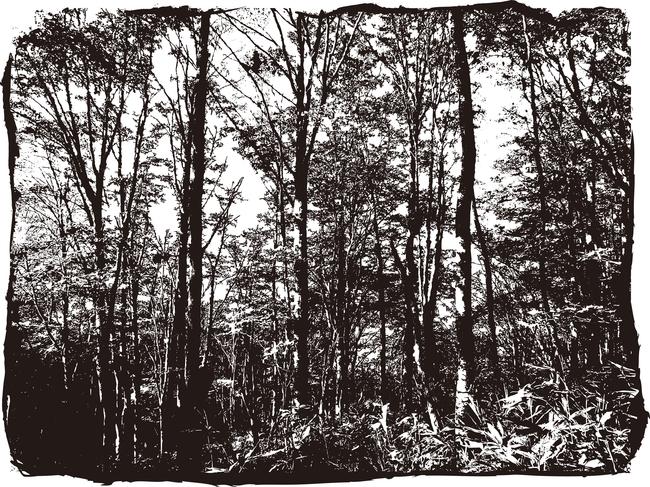 场景效果图手绘 黑夜 插画 插画背景 手绘插画 电脑美术 绘画 森林