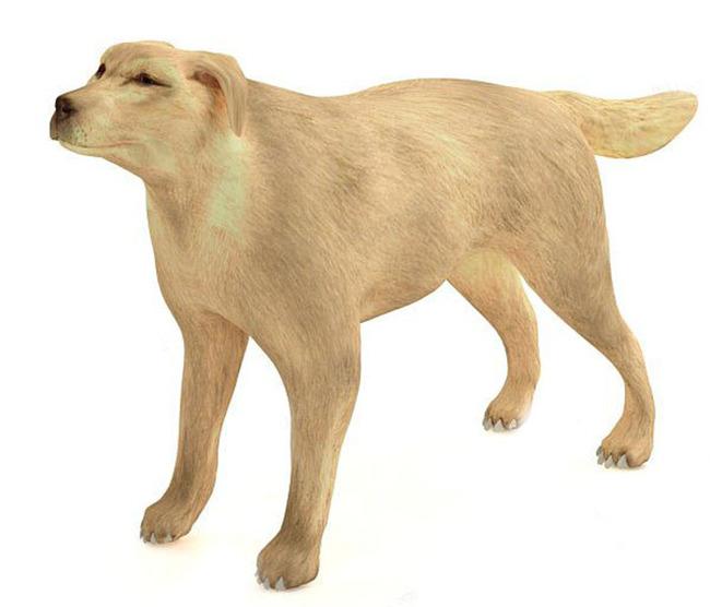 3d写实大黄狗一只模板下载(图片编号:13642531)_动物
