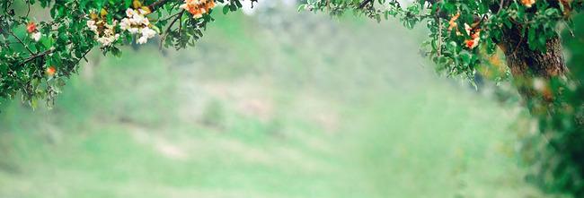夏天森林手绘手机壁纸分享展示