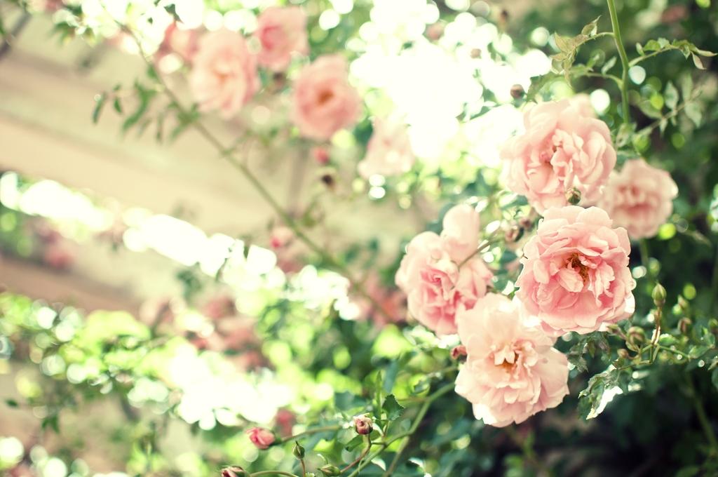 高清风景花朵素材图片图片