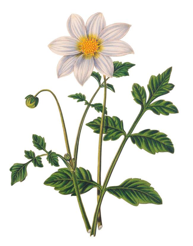 手绘复古植物40
