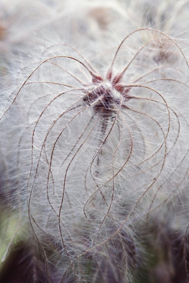 自然背景 纹理 树叶 树木 沙漠 生物世界 贝壳 植物 花叶 花朵 天空