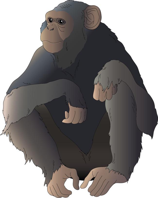 下载猩猩猴子动物小动物