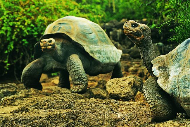 生物摄影图片下载乌龟海龟 金钱龟 动物世界水产水底 动物 海底世界