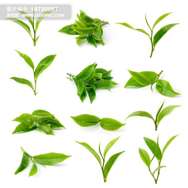 茶叶素材模板下载 茶叶素材图片下载