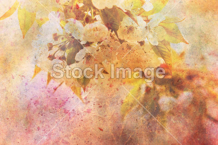微妙苹果树花和水彩笔画的 图稿 图片素材