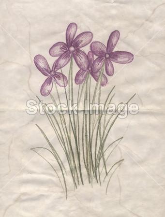 手绘图的鲜花摄影图片下载