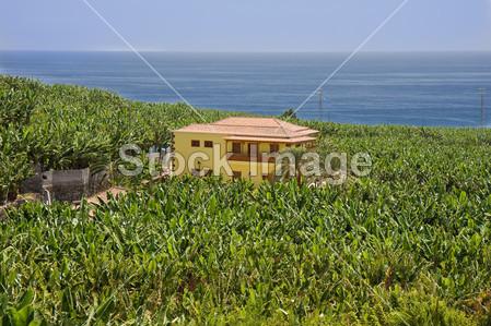 >房子包围拉帕尔马岛香蕉种植园