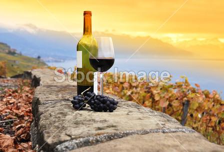 杯红酒在露台葡萄园在熔丝区域,真空断路器图