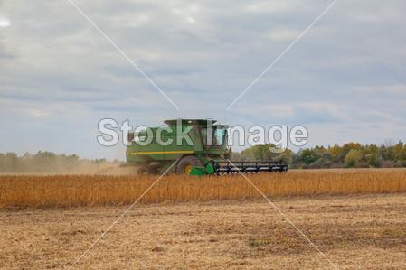 成熟大豆单棵图片大全