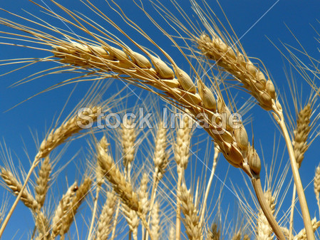 220v小麦电葫芦手柄接线图