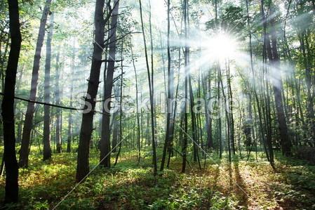 阳光明媚的森林动态