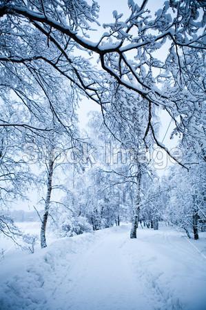 冬天树摄影图片下载_自然风光