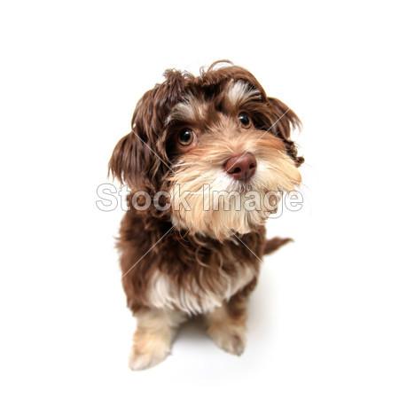 摄影图片下载_人与宠物_人物_拍图网