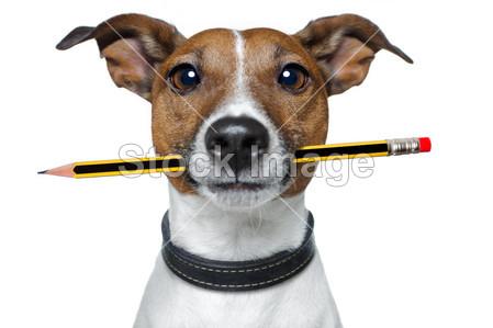 杰克 罗素 梗 笑话 学习 学习 可爱的 办公室 油漆 画家 笔 铅笔 宠物