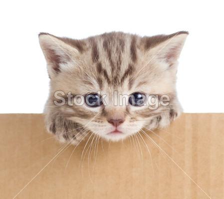 废纸盒手工制作大全图片动物