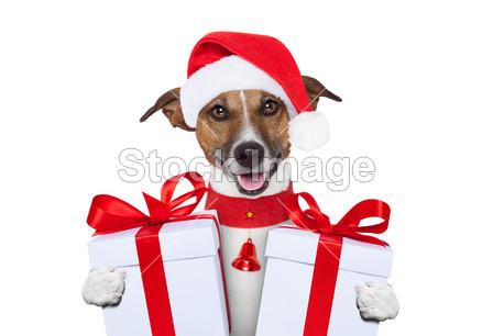 可爱的 快乐的 新的 宠物 肖像 目前的 漂亮的 小狗 红色的 圣诞老人