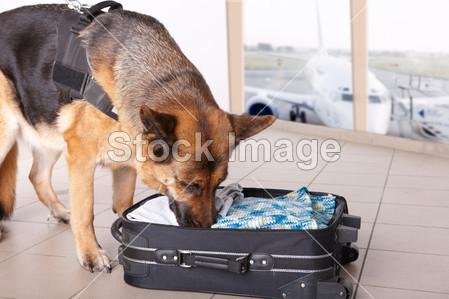 狗嗅在机场      飞机