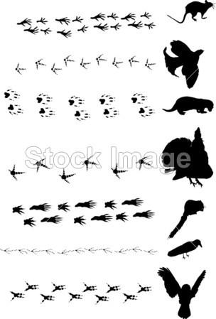 动物 艺术 背景 鸟 黑色的 卡通 概念 crowf 元 脚 人行道 足迹 脚印