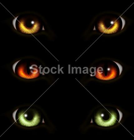 动物的眼睛摄影图片下载