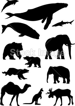 野生动物.剪影集合摄影图片下载