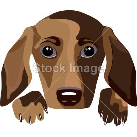 动物 艺术 宝贝 背景 品种 棕色的 卡通 剪贴画 腊肠犬 亲爱的