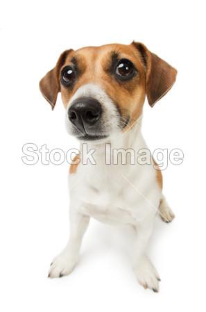 寻找 在 相机 可爱的 哺乳动物 一个 动物 和平 系谱 纯种的 宠物